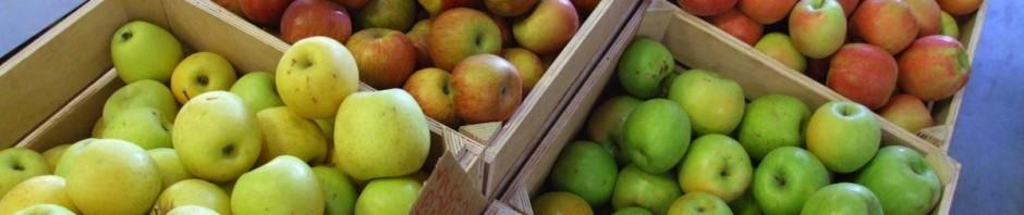 """""""אלה המכוערים, אבל הטעימים"""", הסביר לנו מוכר התפוחים. צודק"""