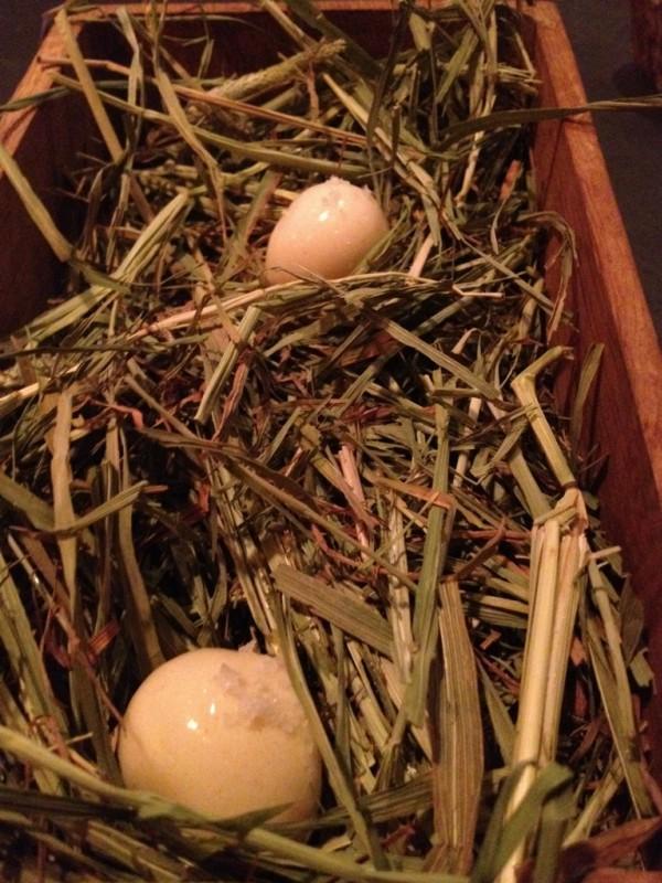 ביצה בקן, סוג של